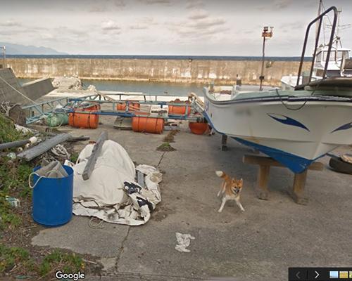 Googleストリートビューの撮影車を追いかけ激走!種子島のワンコ(柴犬)がかわいすぎる件2