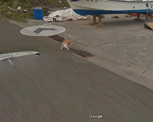 Googleストリートビューの撮影車を追いかけ激走!種子島のワンコ(柴犬)がかわいすぎる件3