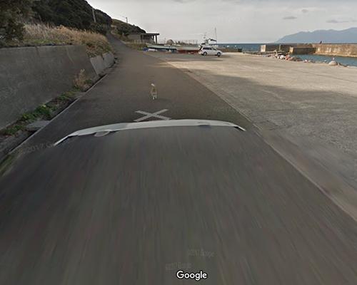 Googleストリートビューの撮影車を追いかけ激走!種子島のワンコ(柴犬)がかわいすぎる件5