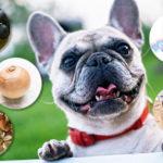 犬にあたえてはいけない食べ物5選