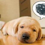 みなさんは愛犬に罰をあたえたことがありますか?