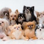 人気犬種ランキングTOP20