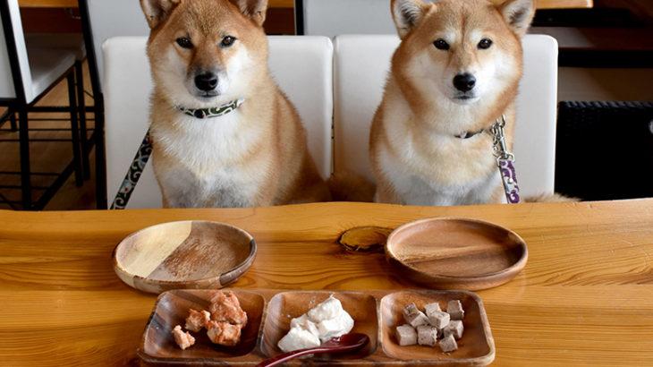 あなたの愛犬は太っていますか?(犬の肥満を知る)