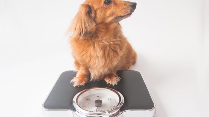 ダイエット、肥満