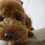 【ドッグフード】消化器疾患に特化した国産ナチュラル療法食フード「犬心(いぬこころ)消化器ケア」