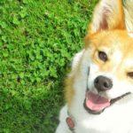 【ドッグフード】ドイツ国内でシェアNo1を誇るプレミアムドッグフード「ハッピードッグ(HAPPY DOG)」