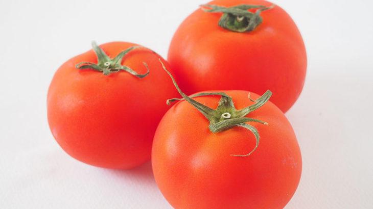 《犬に与える食べ物》犬にトマトは与えても大丈夫?知識9つ